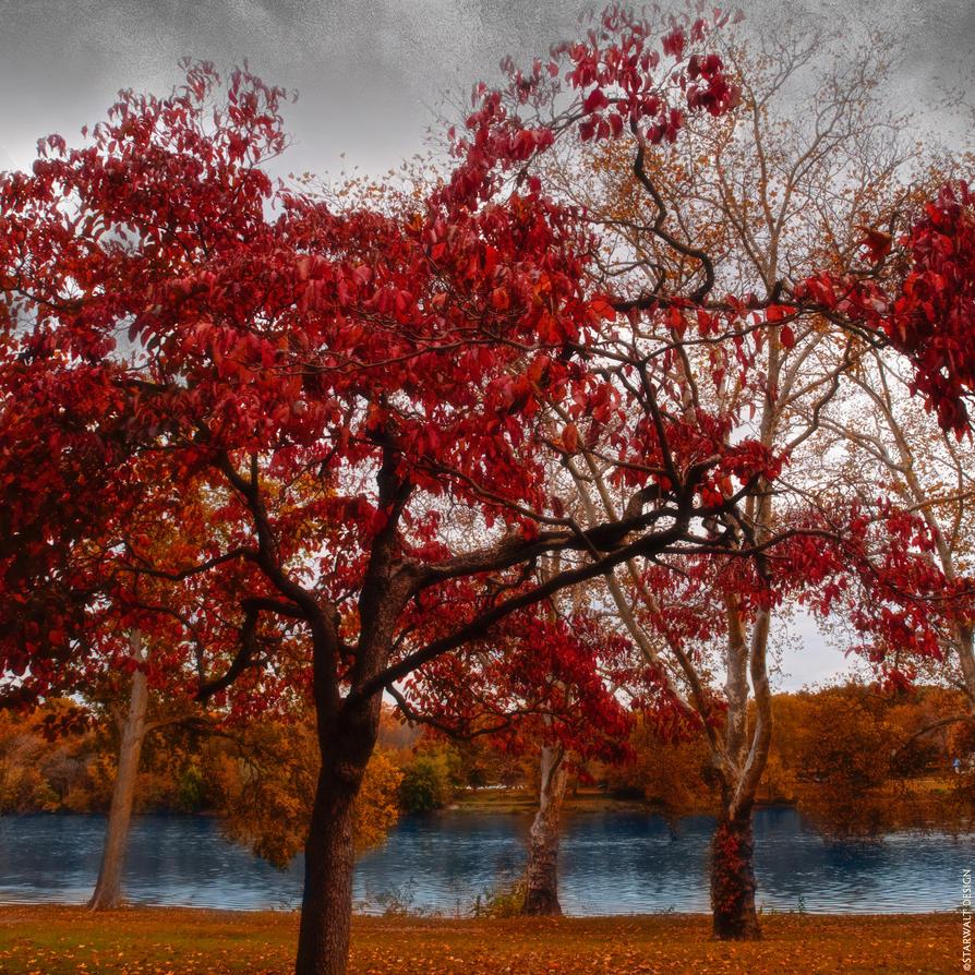 Delaware River in Fall by StarwaltDesign
