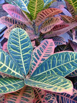 leafburst