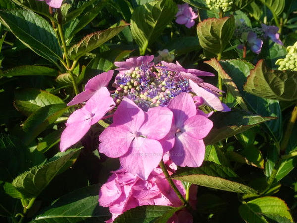 Pink flower by LittleAlicorn