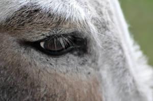 Donkey by Nesiory