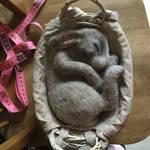 Needle felted Sleeping Rabbit