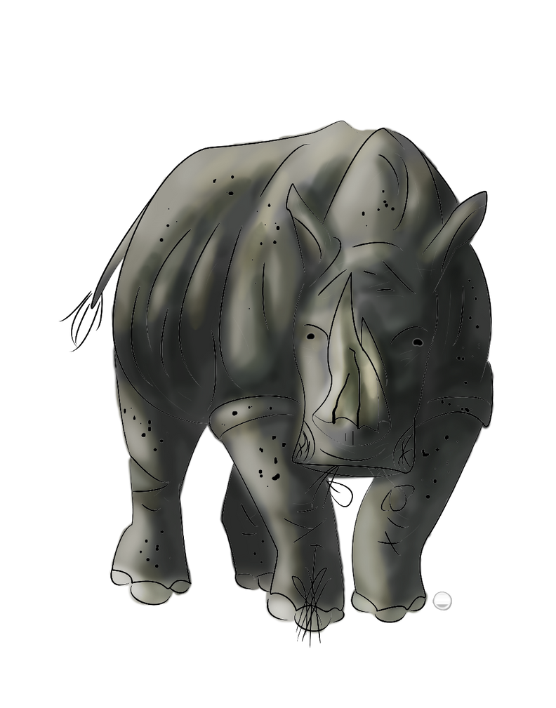 White Rhino by whitefang4000