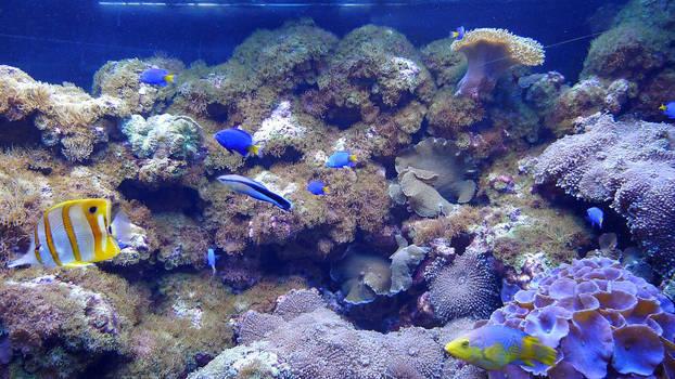 The colors of aquarium