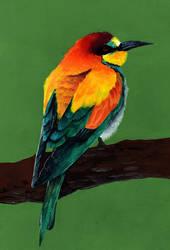 Bird study by hooshiyo