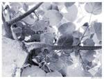 leaves 2.