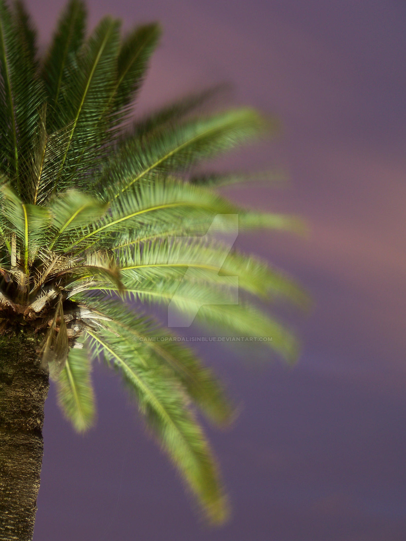 Evening Palm by camelopardalisinblue