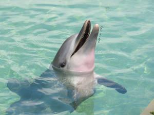 no need to delphin so deeply...