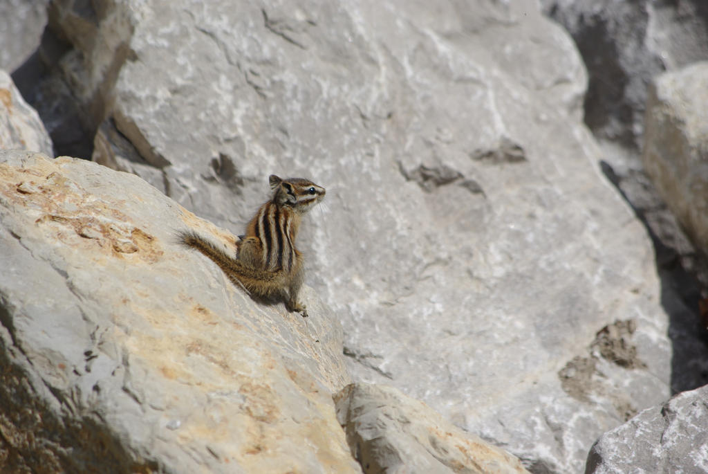 Chipmunk on the Rocks by CJayS