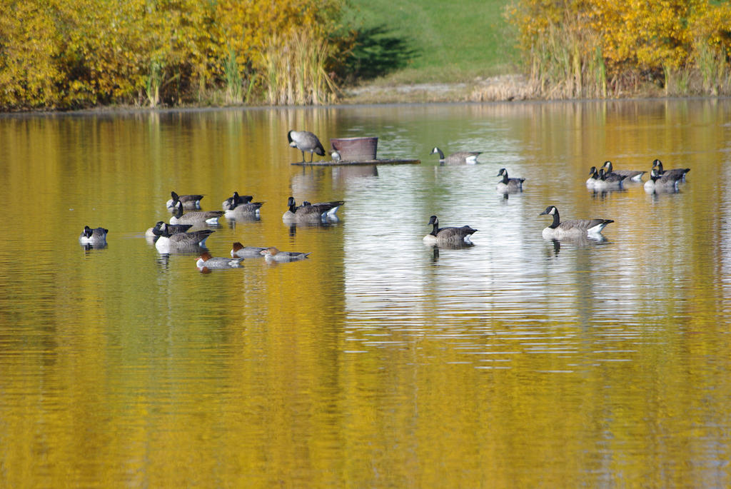 Pond in Fall by CJayS