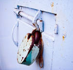 Door bolt and padlock
