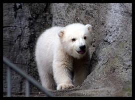 Polar bear by AF--Photography