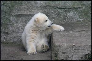 Baby polar bears again II by AF--Photography