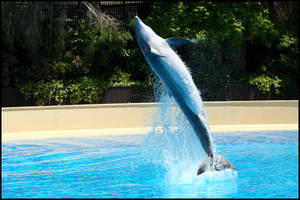 Dolphins at the Mirage III by AF--Photography