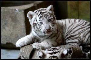 White poser by AF--Photography