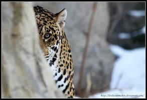 Jaguar I by AF--Photography