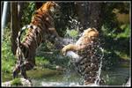 Tiger slap-shot