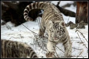 Wild attack by AF--Photography