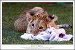 Akimba: His towel