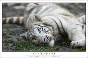 Lightblue eyes by AF--Photography