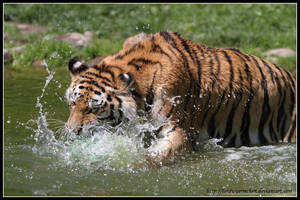 Water fun I by AF--Photography