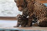 Jaguars: Respect