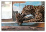 Jaguars: Protection II