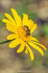 Yellow by GreenlandsGirl