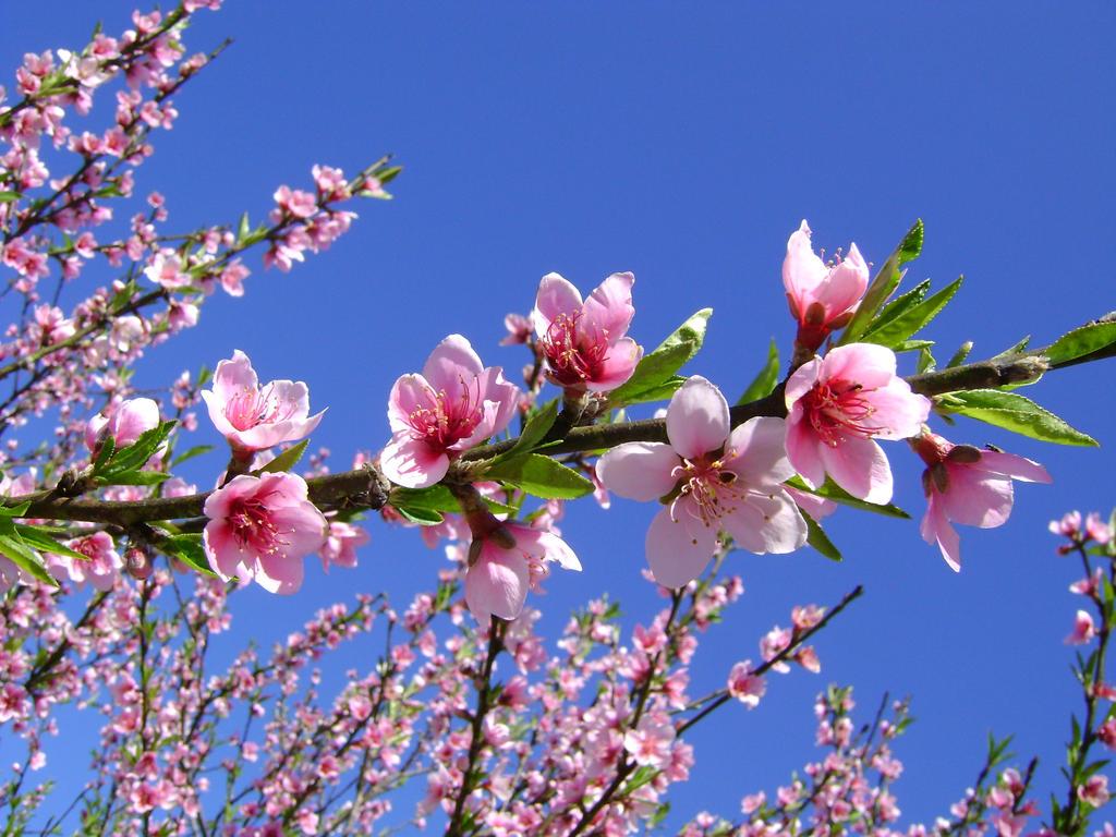 Beautiful Flowers By Luciramms On Deviantart