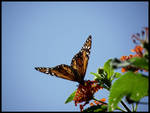 The Morning of a Monarch 3