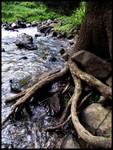 Roots on water