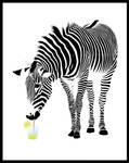 Zebras have more fun