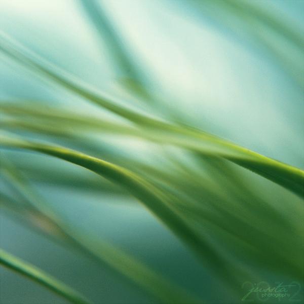 Green vitamin by jussta