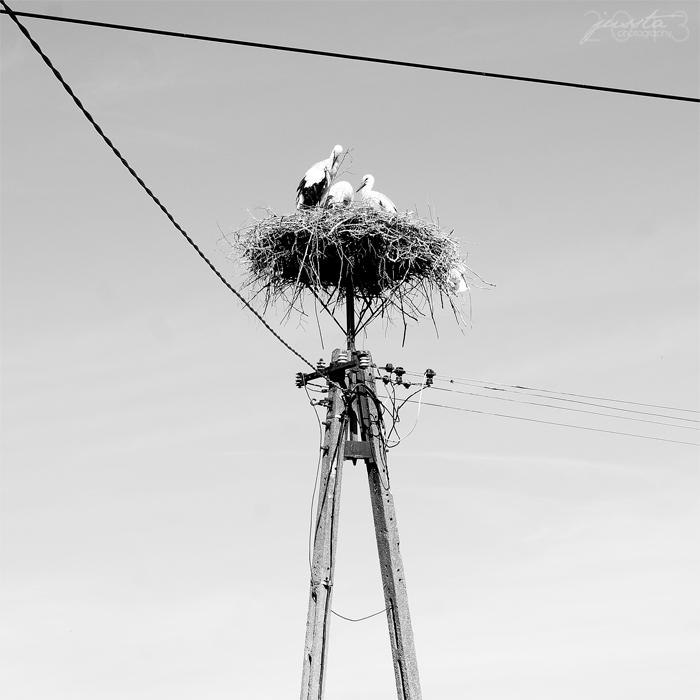 Storks by jussta