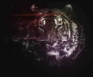 dom'Tiger