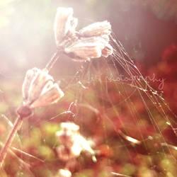 last summer breath II by LizHeartcore