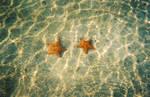 Real Star Fish by Kagomemiko247