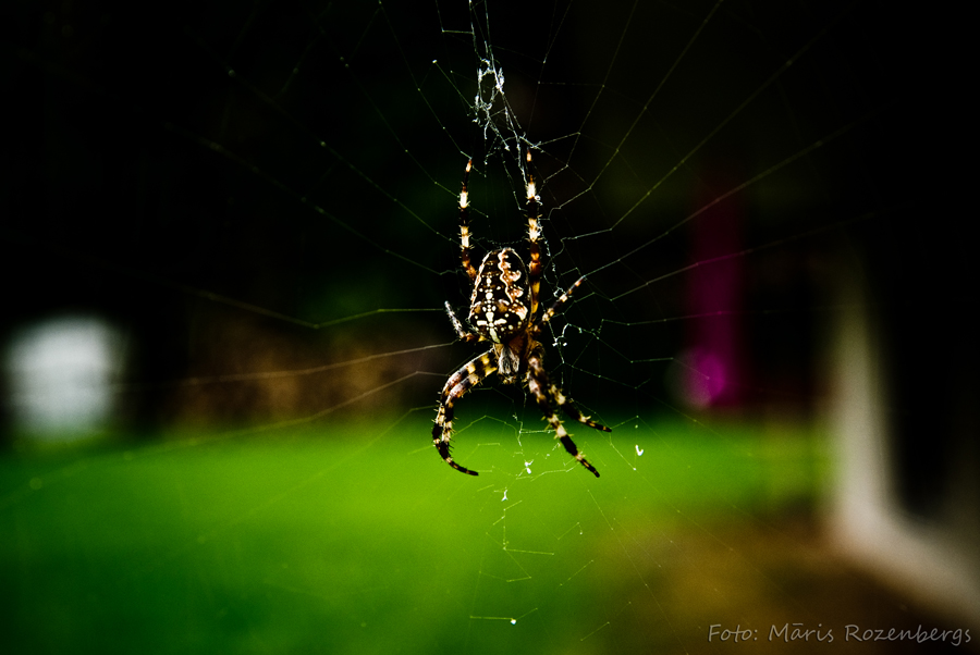 Spider by korners