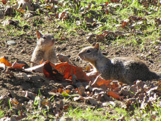 Squirrel Meeting