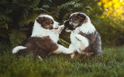 Puppy fight! by IllusoryCalm