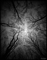 Nearness II by Limeandrum