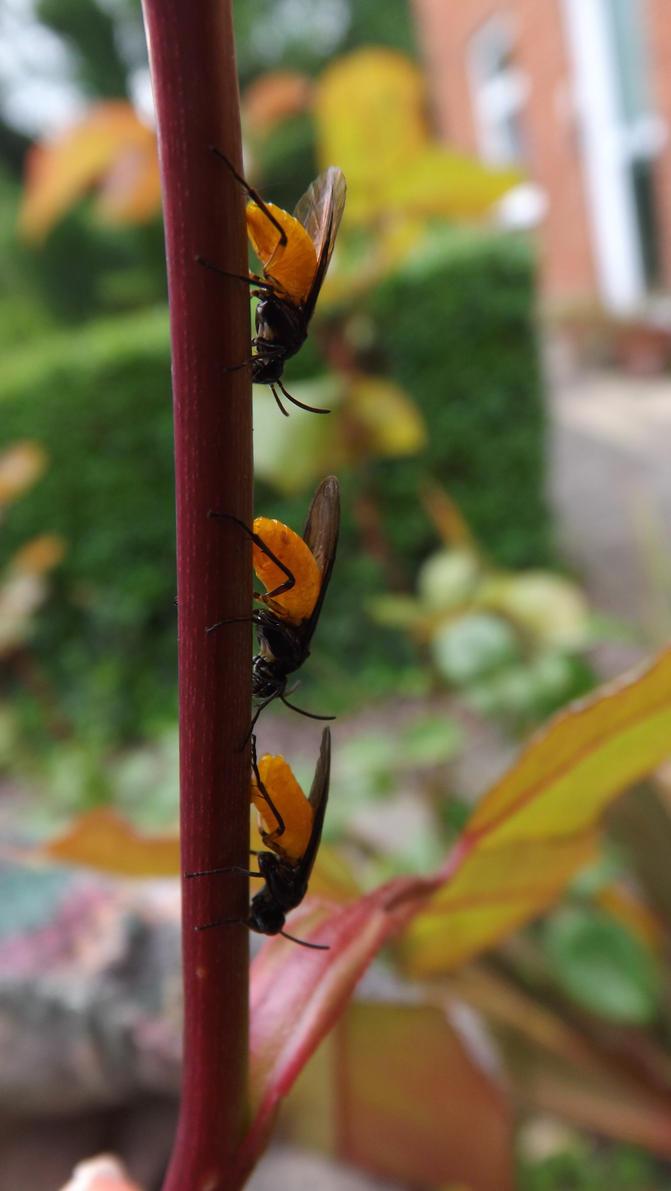 how to kill rose bush bugs