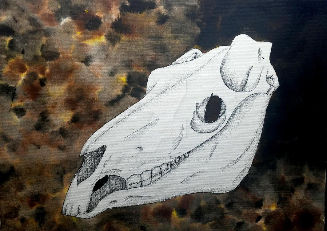 Horse skull by anexa1