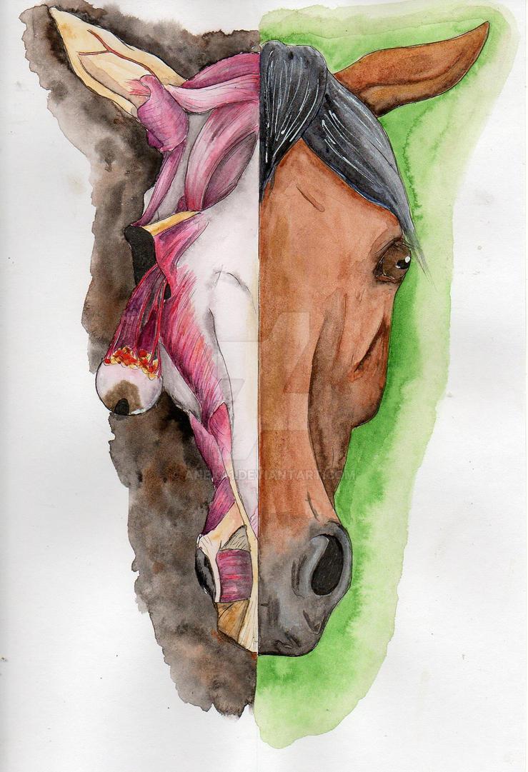 Zombie horse by anexa1