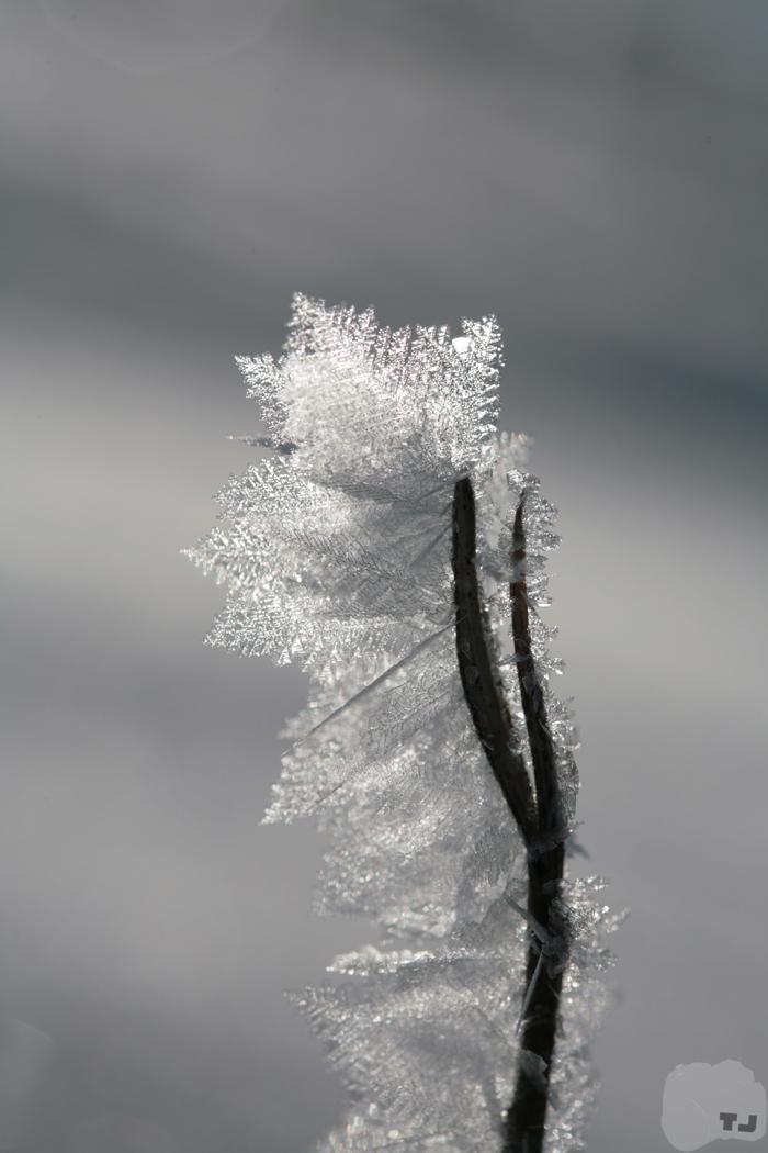 Cristal Ice  stecco diaframma by Jack-TwentyFive