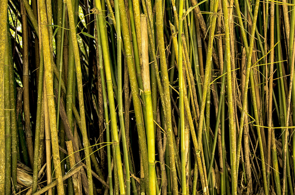 Reeds by rmh7069