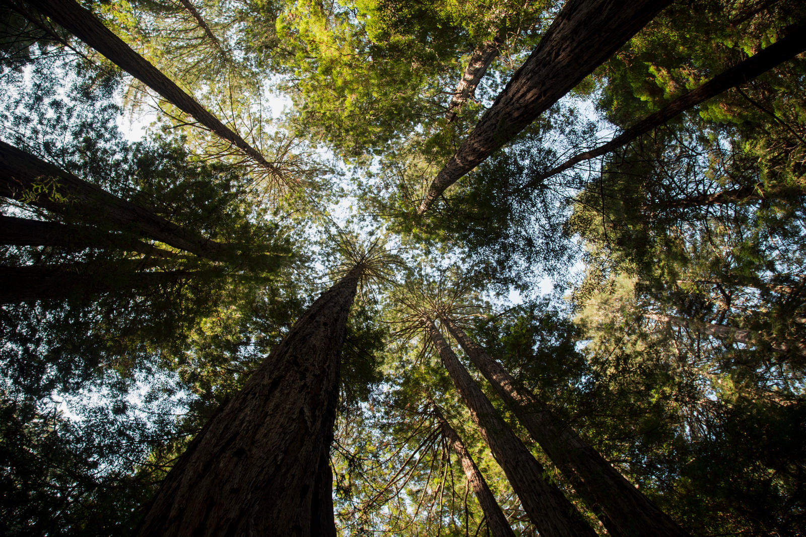 Muir Woods by rmh7069
