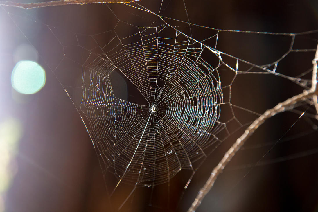 Web of... by rmh7069