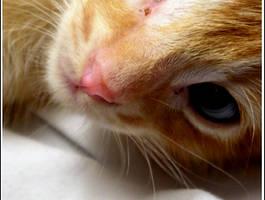 Kitten Eyes by JessicaM