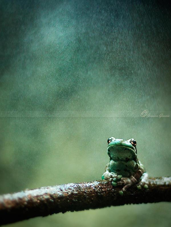Misty by JessicaM