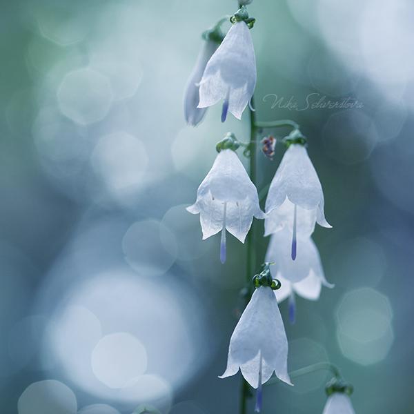 silver bells by nakedlady